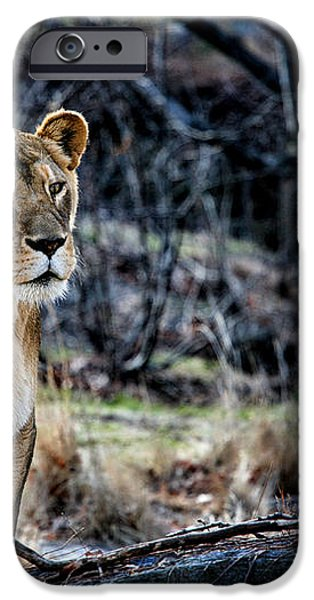 The Lioness iPhone Case by Karol  Livote