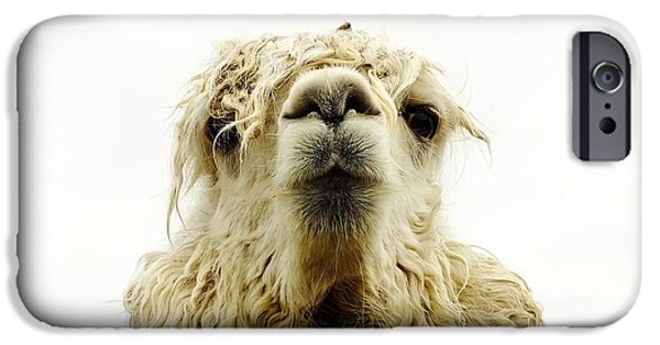 Llama Digital iPhone Cases - The Look iPhone Case by Andy Klamar