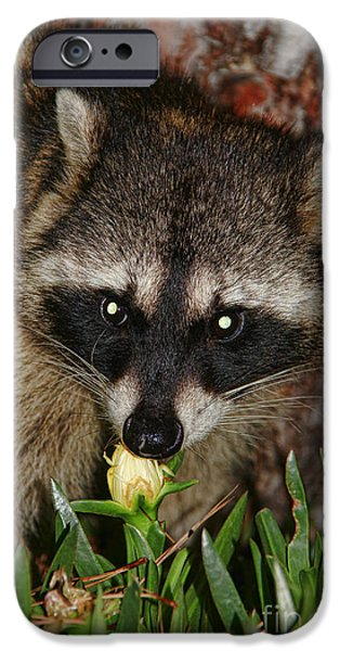 Wild Animals iPhone Cases - The Masked Bandit iPhone Case by Mariola Bitner