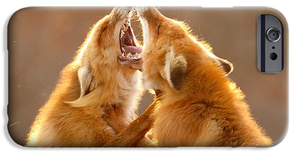 Hierarchy iPhone Cases - The Meeting _ Red Fox Fight iPhone Case by Roeselien Raimond