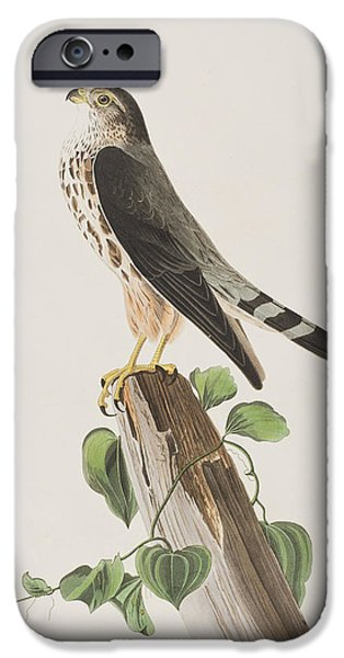 Species Paintings iPhone Cases - The Merlin iPhone Case by John James Audubon