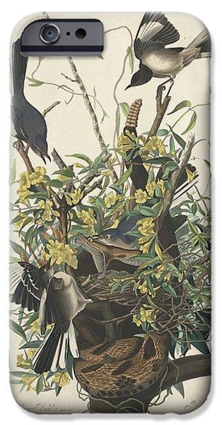 Mockingbird iPhone Cases - The Mockingbird iPhone Case by John James Audubon