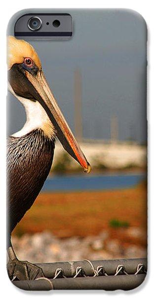 The most beautiful Pelican iPhone Case by Susanne Van Hulst