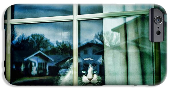 Cat Reflection iPhone Cases - The Neighborhood Watch - animals cats  iPhone Case by Ann Powell