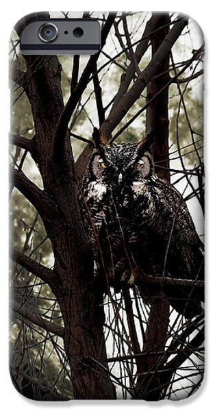 The Night Owl and Harvest Moon iPhone Case by Wingsdomain Art and Photography