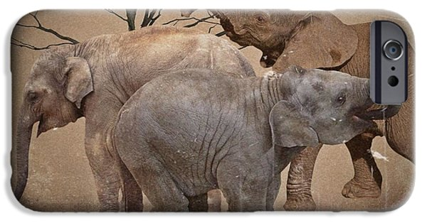 Wild Animals iPhone Cases - The old herd iPhone Case by Sharon Lisa Clarke