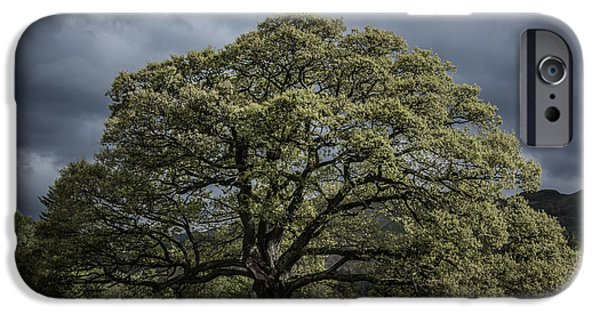Meadow Photographs iPhone Cases - The Old Oak of Glenridding v2.0 iPhone Case by Chris Fletcher