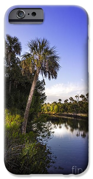 Palmettos iPhone Cases - The Palm Stream iPhone Case by Marvin Spates