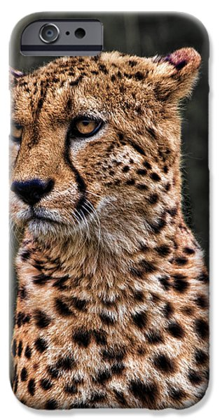 Cheetah Digital Art iPhone Cases - The Pensive Cheetah iPhone Case by Chris Lord