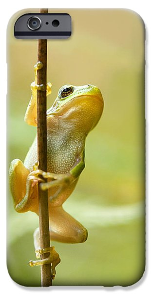 Wild Animals iPhone Cases - The Pole Dancer - Climbing Tree frog  iPhone Case by Roeselien Raimond
