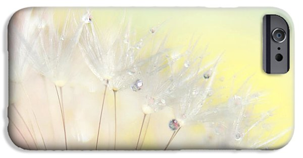 Floral Photographs iPhone Cases - The Rainbow Connection iPhone Case by Amy Tyler