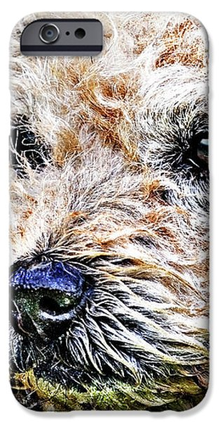 the scruffiest dog in the world iPhone Case by Meirion Matthias