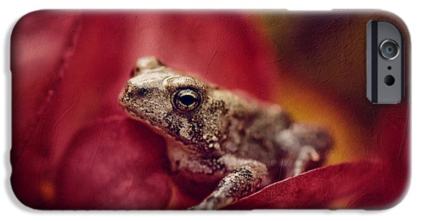 Wild Animals iPhone Cases - The Secret World Of Peepers iPhone Case by Lois Bryan