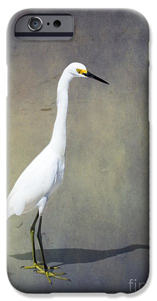 Sea Birds iPhone Cases - The Snowy Egret by Darrell Hutto iPhone Case by Darrell Hutto