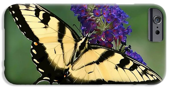 Freedom iPhone Cases - The Swallowtail iPhone Case by Sue Melvin
