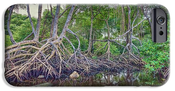 Mangrove Forest iPhone Cases - The Swamp iPhone Case by Nadia Sanowar
