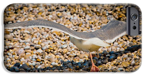 Seagull iPhone Cases - The Takeoff iPhone Case by Loriental Photography