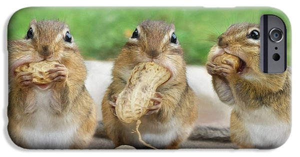 Chipmunk iPhone Cases - The Three Stooges iPhone Case by Lori Deiter