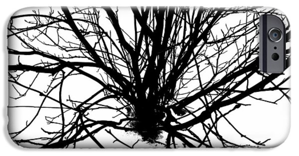 Abstract Digital Photographs iPhone Cases - Stretched Birch  iPhone Case by Jerod Scheiferstein