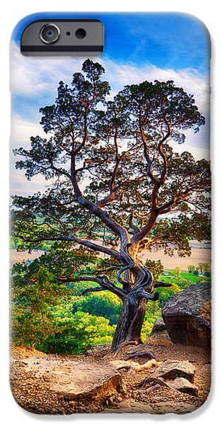 Hdr Look iPhone Cases - The tree iPhone Case by Keith Homan