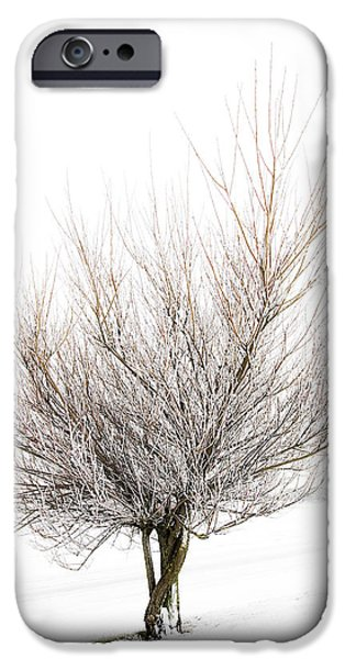 The Tree iPhone Case by Svetlana Sewell