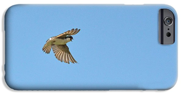 Barn Swallow iPhone Cases - The Tree Swallow in-flight iPhone Case by Asbed Iskedjian