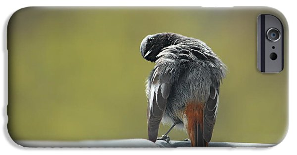 Animal Picture iPhone Cases - The View iPhone Case by Heike Hultsch