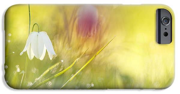 Meleagris iPhone Cases - The White Queen iPhone Case by Roeselien Raimond