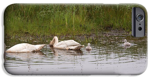 Swans... iPhone Cases - The Whole Family iPhone Case by Linda Kerkau