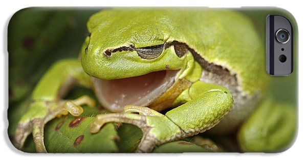 Frogs Photographs iPhone Cases - The Yawning Tree Frog iPhone Case by Roeselien Raimond
