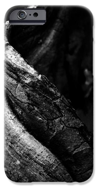Tree Roots iPhone Cases - Themselves Alone iPhone Case by Rebecca Sherman