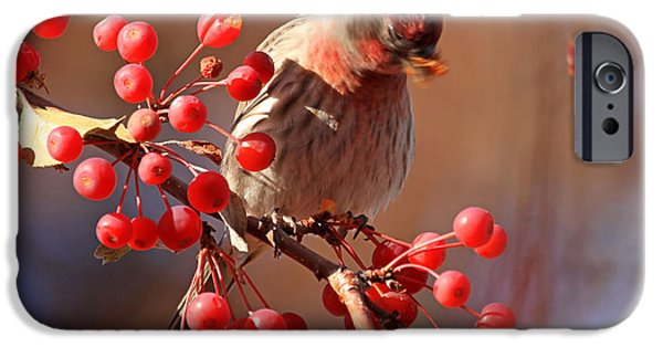 Finch iPhone Cases - These Berries Are Making Me Dizzy  iPhone Case by Donna Kennedy