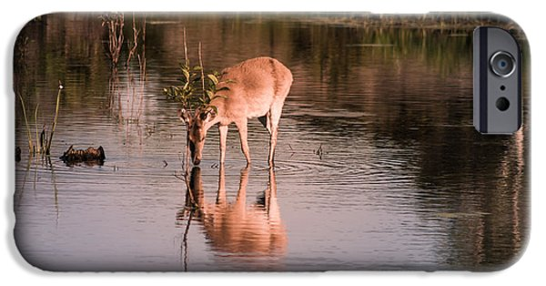 Snowy Day iPhone Cases - Thirsty Deer 2 iPhone Case by Debra Forand