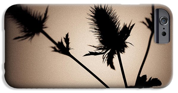 Thistle iPhone Cases - Thistle iPhone Case by Dave Bowman
