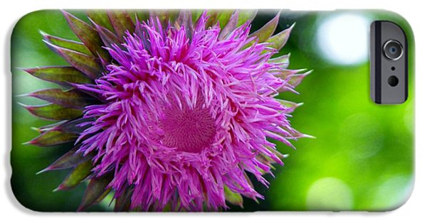 Arkansas iPhone Cases - Thistle flowerhead iPhone Case by Diane McDougall