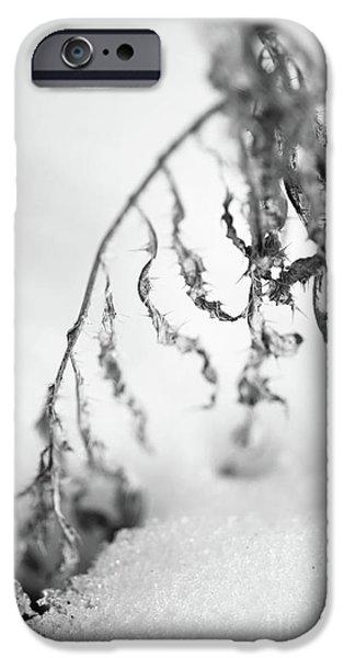 Thistle in snow iPhone Case by Gabriela Insuratelu