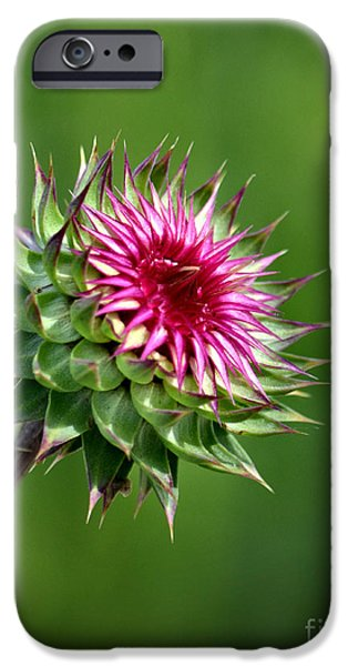 Fauna iPhone Cases - Thistle Quandary iPhone Case by Deb Halloran