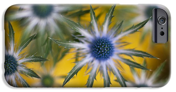 Thistle iPhone Cases - Thistle Stars iPhone Case by Mike Reid