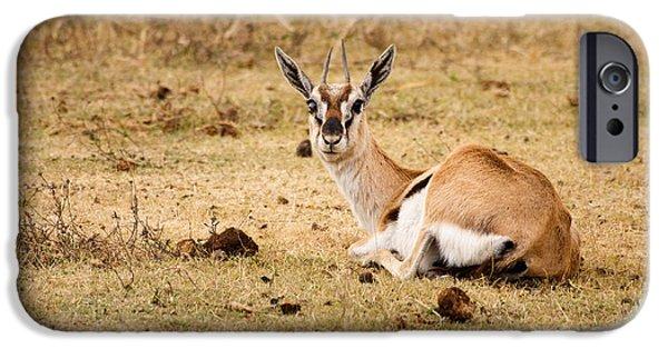 Ngorongoro Crater iPhone Cases - Thomsons Gazelle iPhone Case by Adam Romanowicz