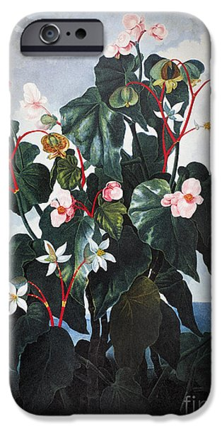1800 iPhone Cases - Thornton: Begonia iPhone Case by Granger