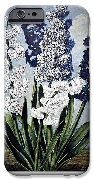 1801 iPhone Cases - Thornton: Hyacinths iPhone Case by Granger