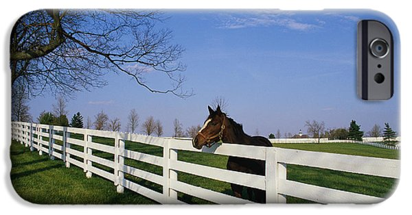 Rural iPhone Cases - Thoroughbred Horse Lexington Ky iPhone Case by Panoramic Images