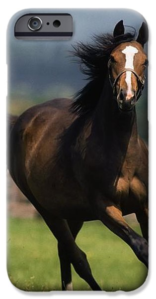 Thoroughbred Horses, Yearlings iPhone Case by The Irish Image Collection
