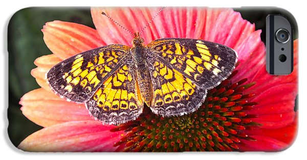 Insect Pyrography iPhone Cases - Those Colors  iPhone Case by Hannah Underhill