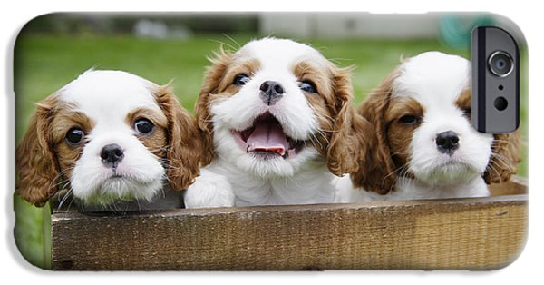 Puppies iPhone Cases - Three Cocker Spaniels Peeking iPhone Case by Gillham Studios