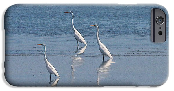 Consumerproduct iPhone Cases - three Egrets iPhone Case by W Gilroy