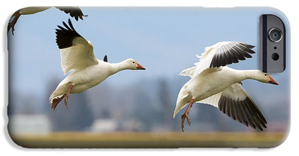 Trio Photographs iPhone Cases - Three Landing iPhone Case by Mike Dawson
