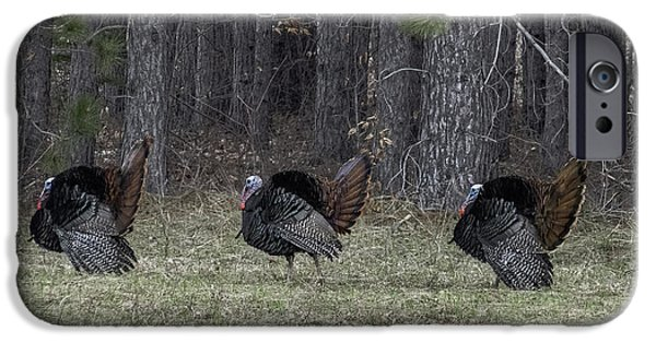 Eastern Wild Turkey iPhone Cases - Three Of A Kind iPhone Case by TAPS Photography