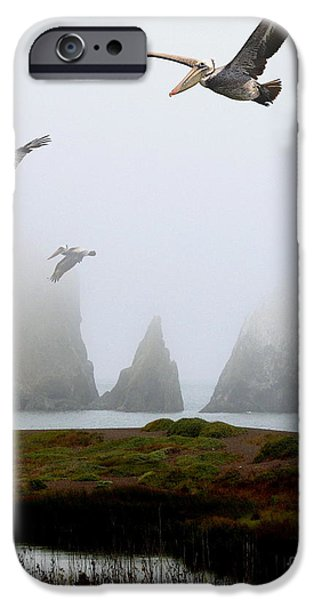 Sausalito iPhone Cases - Three Pelicans in Portrait iPhone Case by Wingsdomain Art and Photography