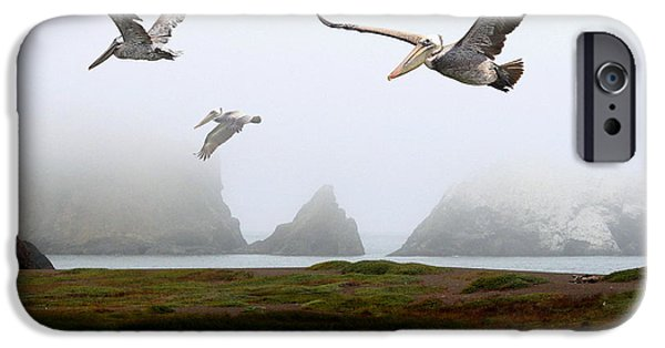 Recently Sold -  - Sausalito iPhone Cases - Three Pelicans iPhone Case by Wingsdomain Art and Photography